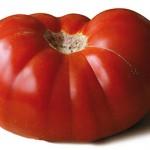 Tomate-perf