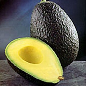 avocado_hass